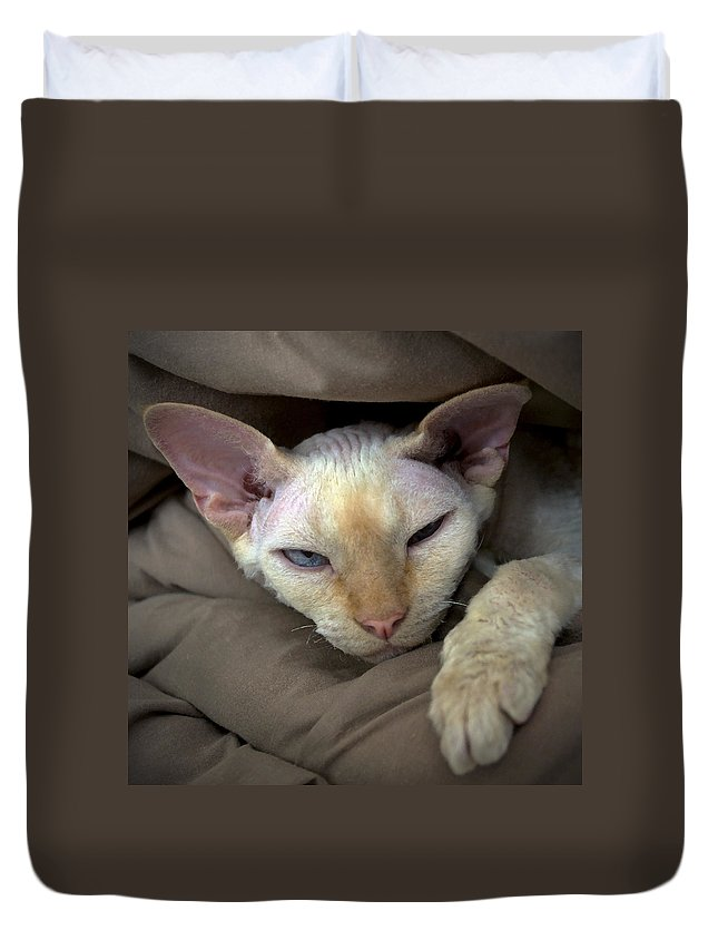 Devon Duvet Cover featuring the photograph Sleepy Oliver 1 by Glennis Siverson
