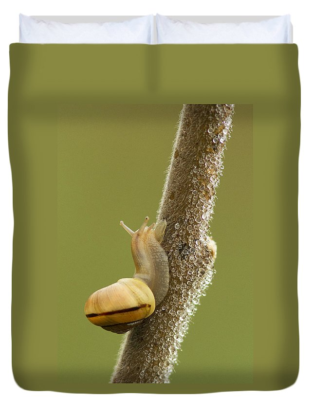 Snail Duvet Cover featuring the photograph Snail In Dew by Mircea Costina Photography