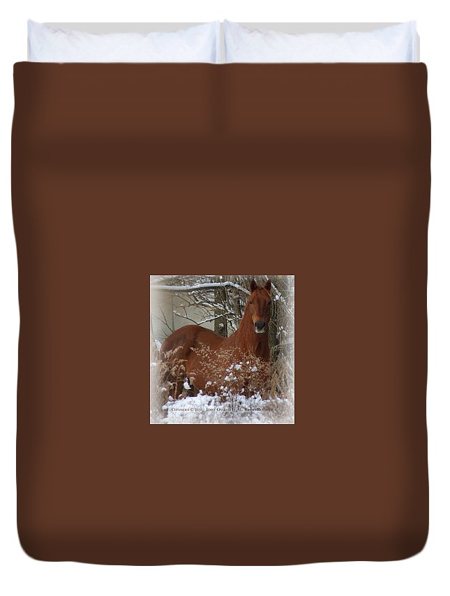 Horse Duvet Cover featuring the photograph Snow Dreams by Jenny Gandert