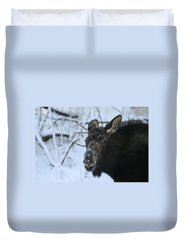 Alaska Duvet Cover featuring the photograph Snowy Nose by Doug Lloyd