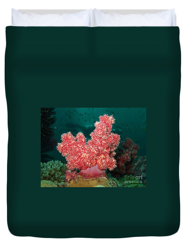 Adventure Duvet Cover featuring the photograph Soft Coral by MotHaiBaPhoto Prints
