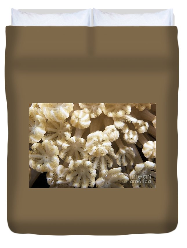 Xenia Actuosa Duvet Cover featuring the photograph Soft Coral Polyps Feeding, Papua New by Terry Moore
