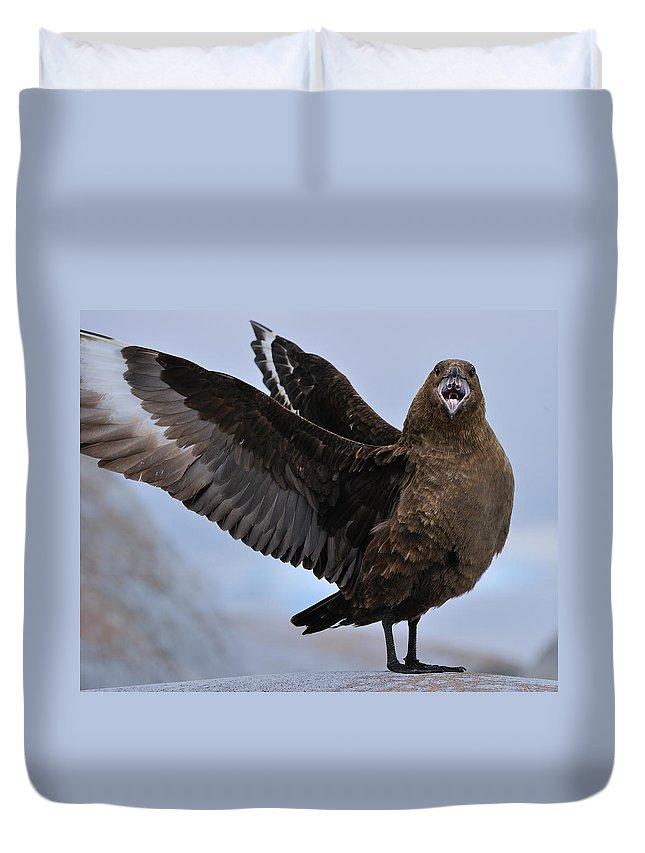 South Polar Skua Duvet Cover featuring the photograph South Polar Skua by Tony Beck