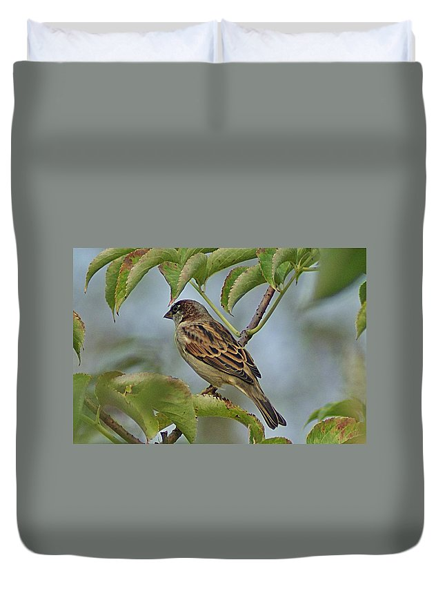 Sparrow Duvet Cover featuring the photograph Sparrow I by Joe Faherty