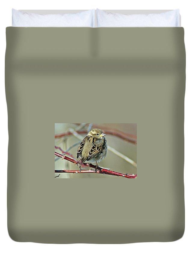 Sparrow Duvet Cover featuring the photograph Sparrow IIi by Joe Faherty