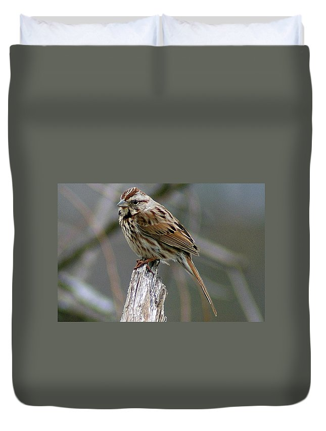 Sparrow Duvet Cover featuring the photograph Sparrow Iv by Joe Faherty