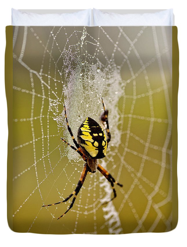 Spider Duvet Cover featuring the photograph Spider Power by Susan Capuano