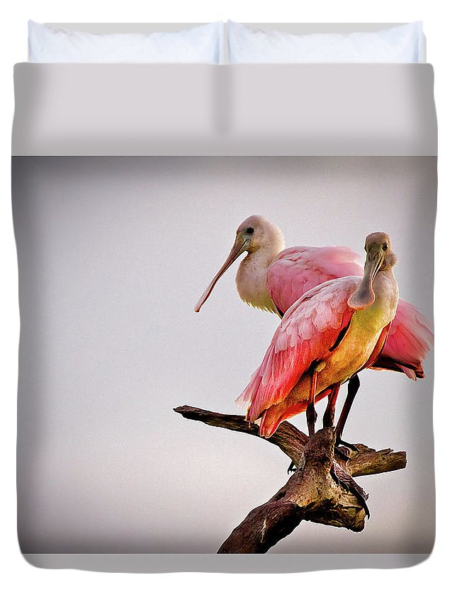 African Duvet Cover featuring the photograph Spoonbills by Debra and Dave Vanderlaan