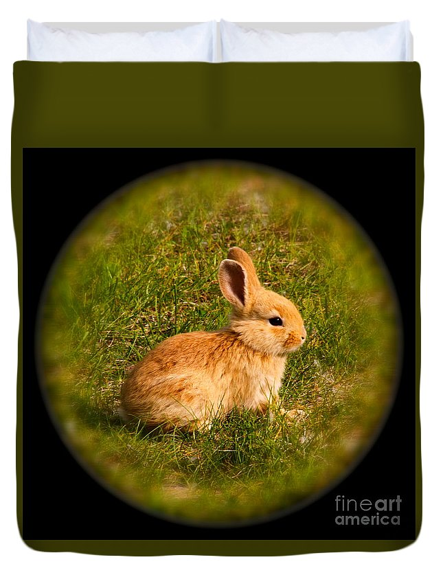 Rabbit Duvet Cover featuring the photograph Spring Bunny by Rick Monyahan