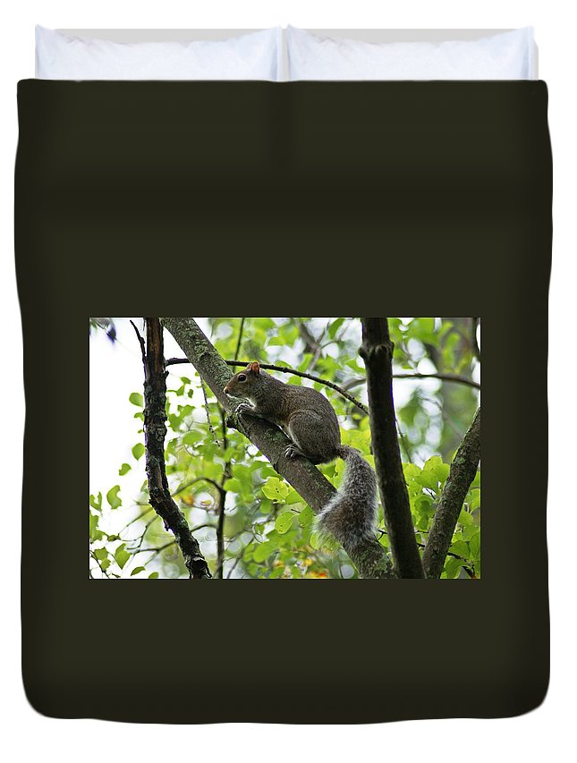 Squirrel Duvet Cover featuring the photograph Squirrel I by Joe Faherty