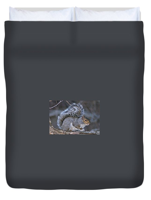 Squirrel Duvet Cover featuring the photograph Squirrel II by Joe Faherty