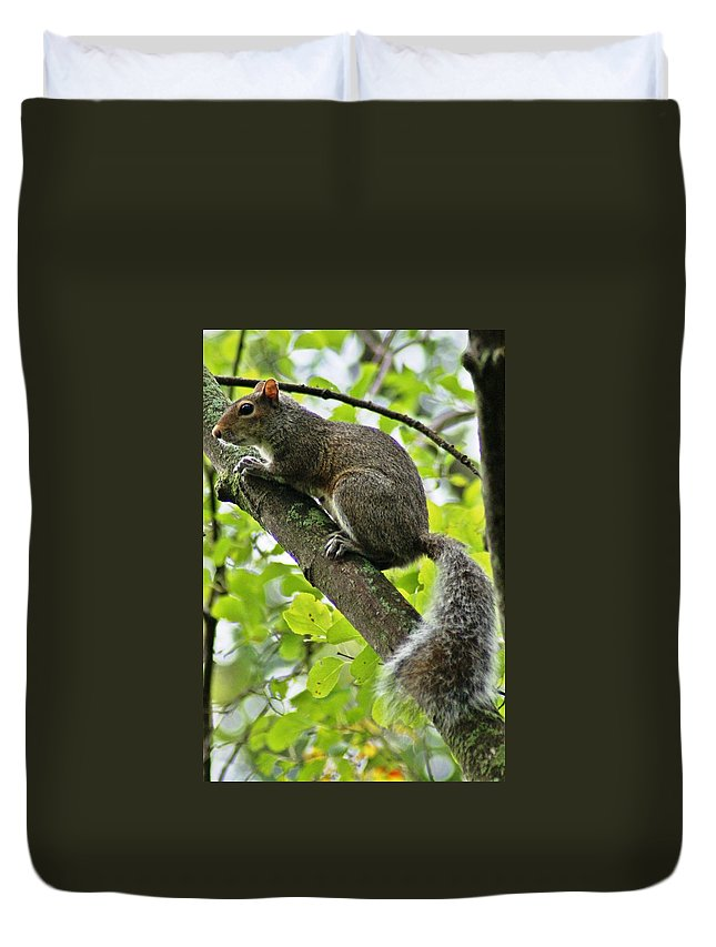 Squirrel Duvet Cover featuring the photograph Squirrel IIi by Joe Faherty