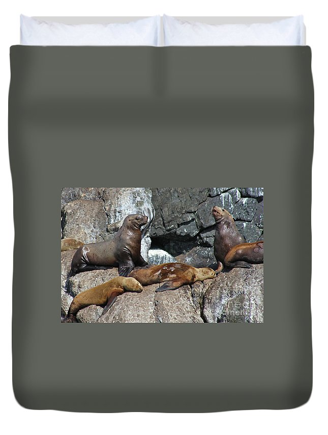 Sea Life Duvet Cover featuring the photograph Steller by Rick Monyahan