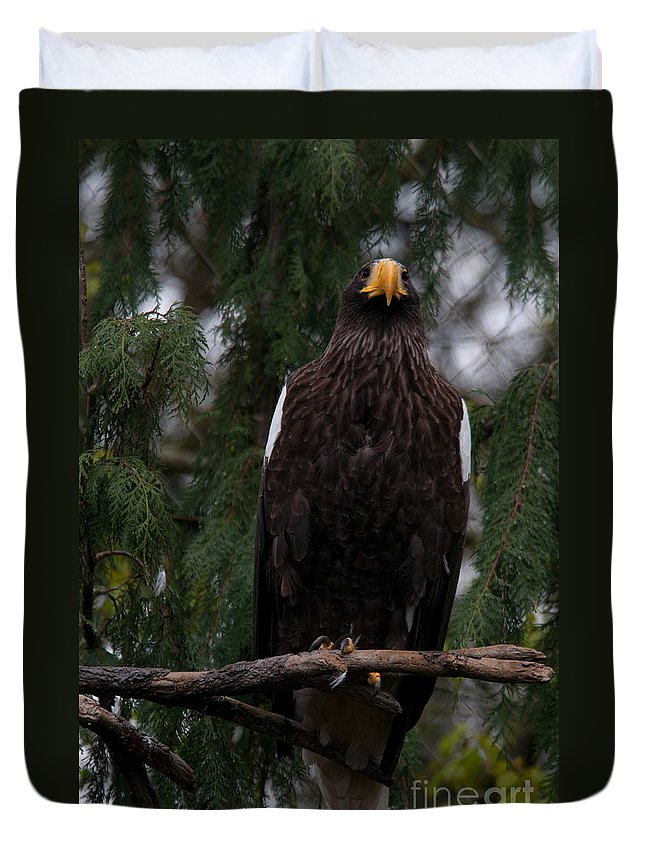 Animals Duvet Cover featuring the digital art Steller's Sea Eagle by Carol Ailles