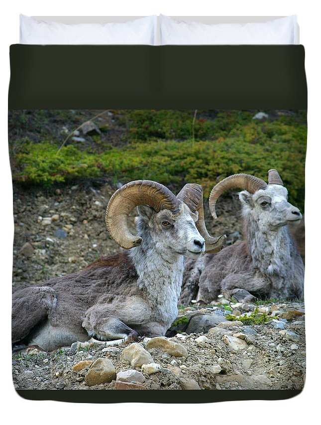 Light Duvet Cover featuring the photograph Stone Mountain Sheep, Stone Mountain by Robert Postma