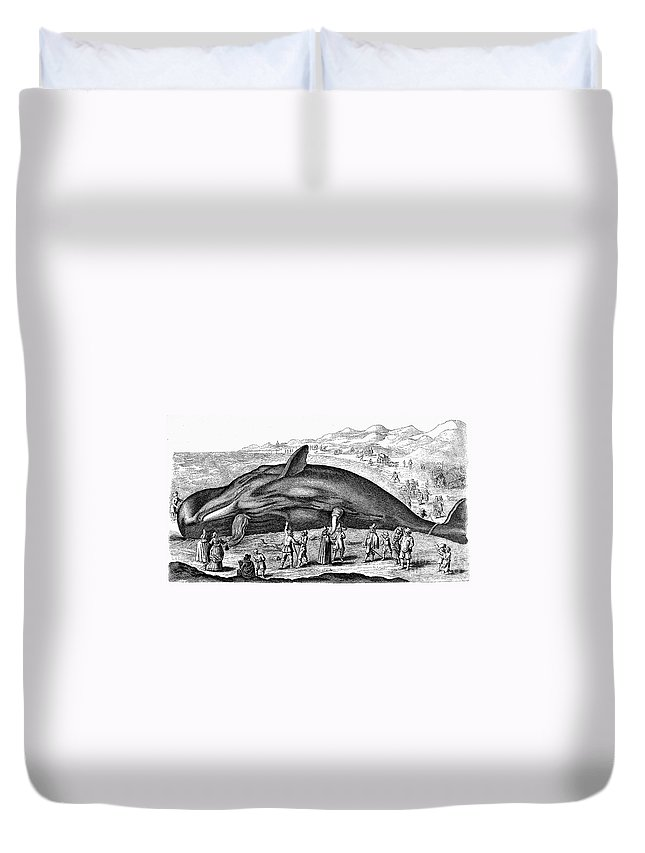 1577 Duvet Cover featuring the photograph Stranded Whale, 1577 by Granger