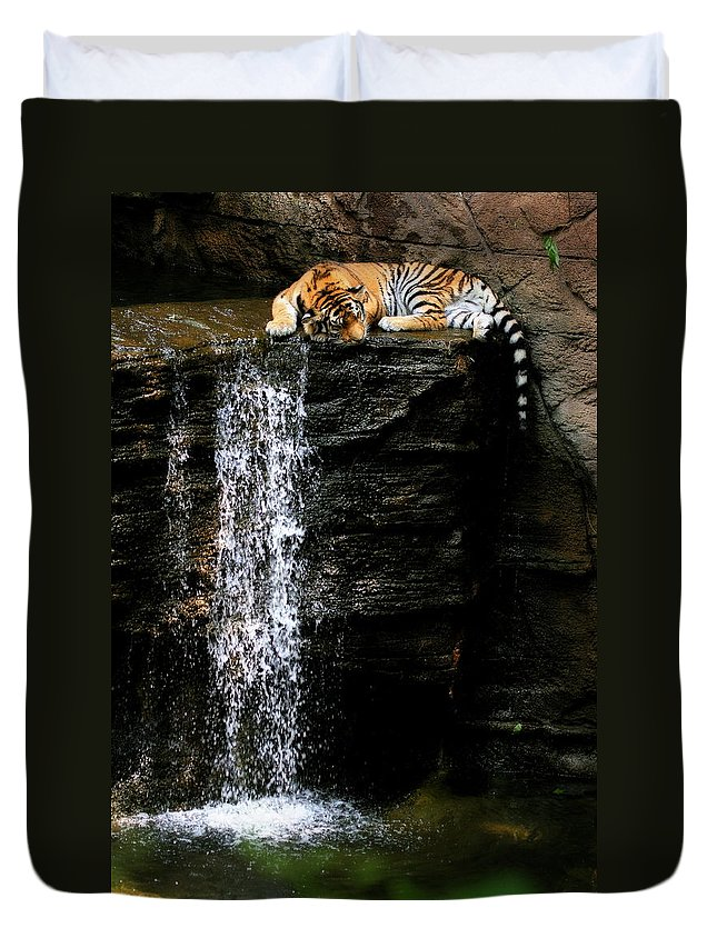 Amur Tiger Duvet Cover featuring the photograph Strength At Rest by Angela Rath