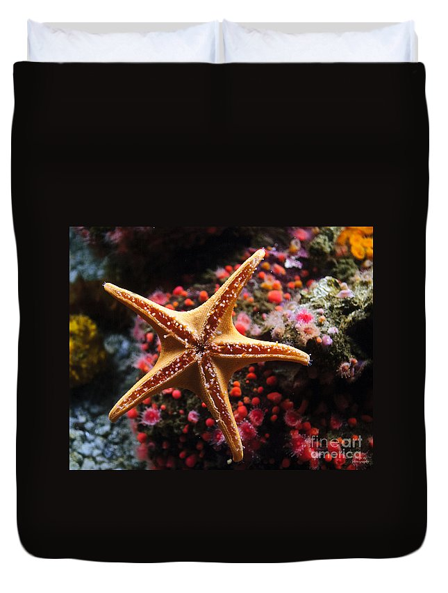 Starfish Duvet Cover featuring the photograph Sucker Starfish by Diego Re