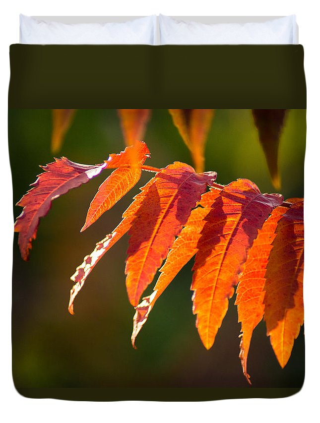 Fall Duvet Cover featuring the photograph Sumac In The Sun by Bill Pevlor