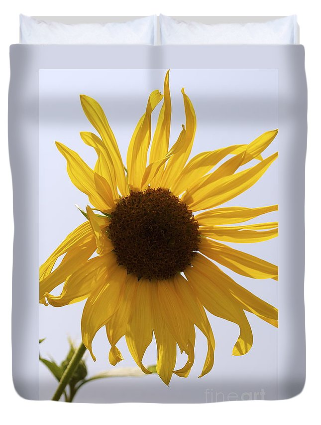 Sunflower Duvet Cover featuring the photograph Sun Kiss by Anjanette Douglas