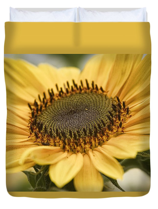Colorful Duvet Cover featuring the photograph Sunflower Bloom by James BO Insogna