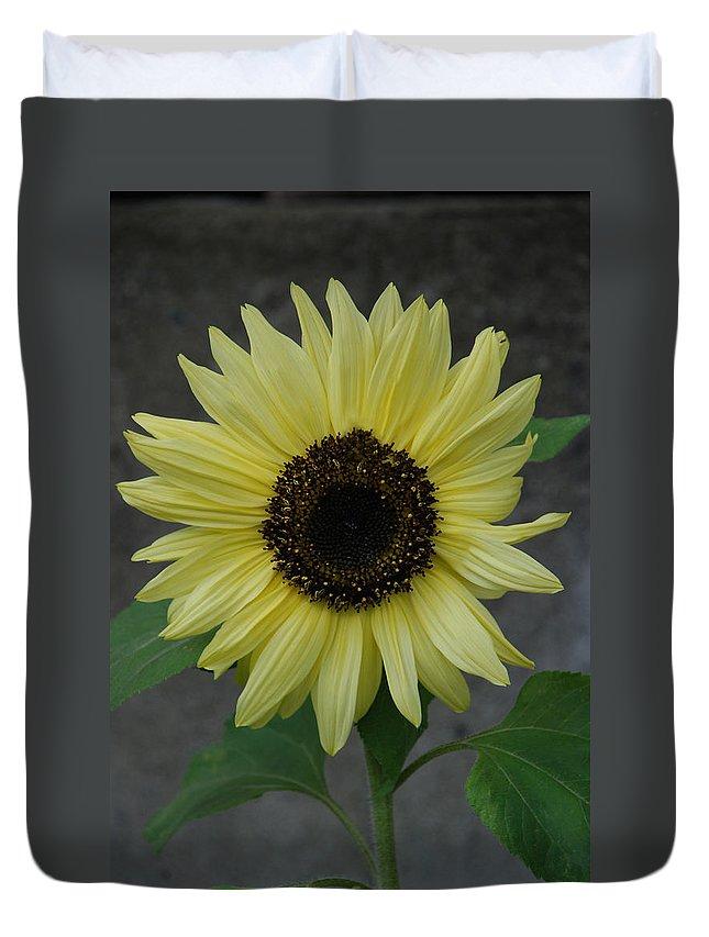 Sunflower Duvet Cover featuring the photograph Sunflower by Carol Eliassen
