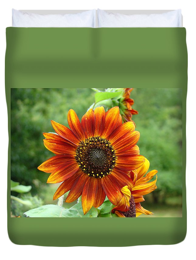 Red Sunflower Duvet Cover featuring the photograph Sunflower by Lisa Rose Musselwhite