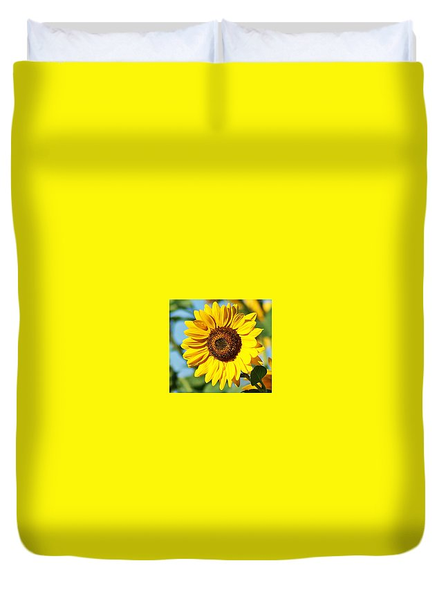 Sunflower Duvet Cover featuring the photograph Sunflower Small File by Joe Faherty