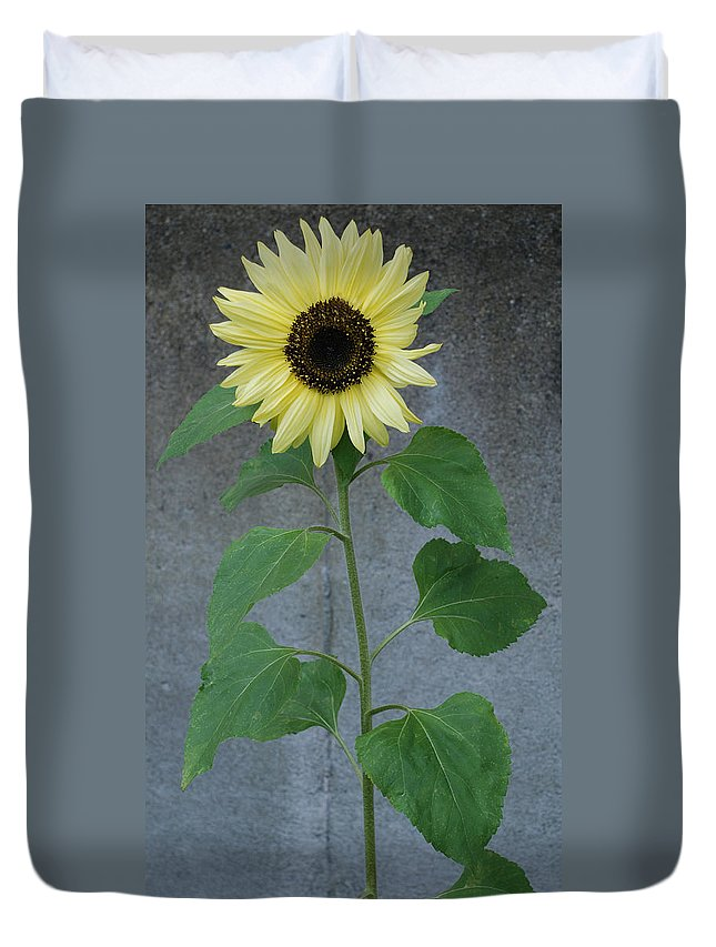 Sunflower Duvet Cover featuring the photograph Sunflower Stalk by Carol Eliassen