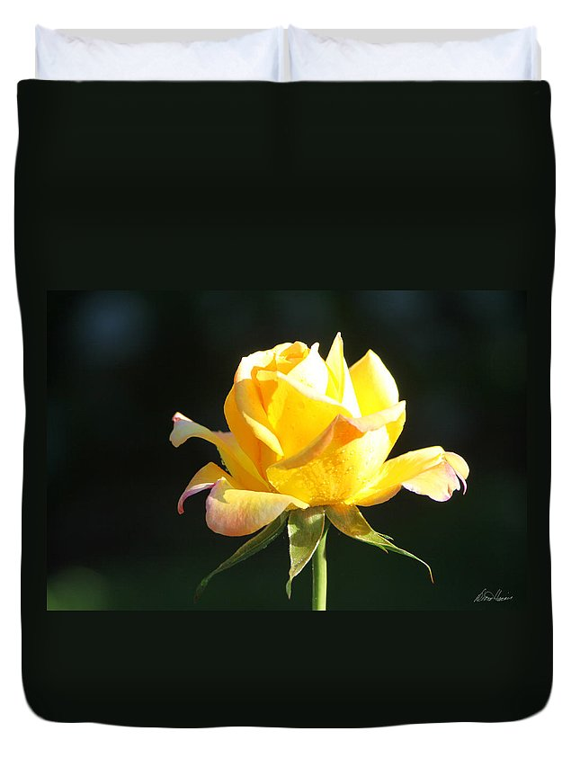 Rose Duvet Cover featuring the photograph Sunlight On Yellow Rose by Diana Haronis