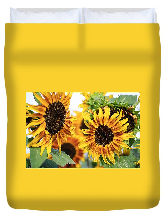 Sunshine Duvet Cover featuring the photograph Sunshine by Diego Re