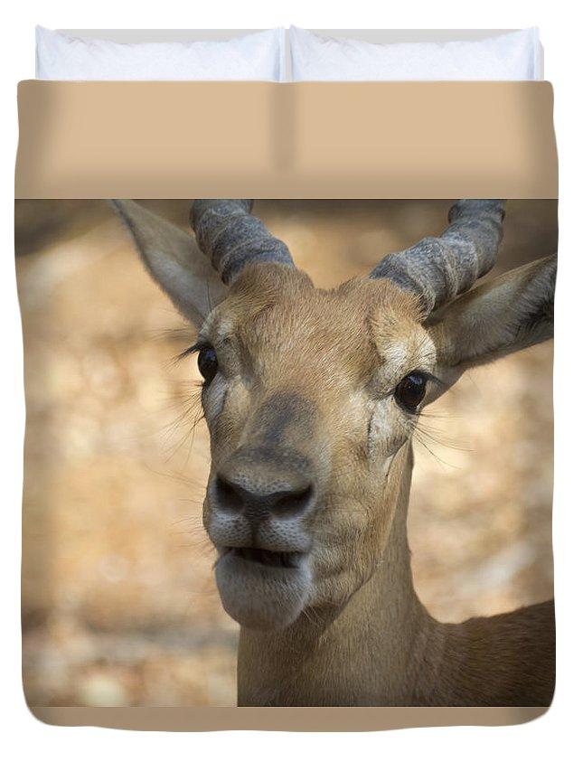 Antelope Duvet Cover featuring the photograph Surprise by Douglas Barnard