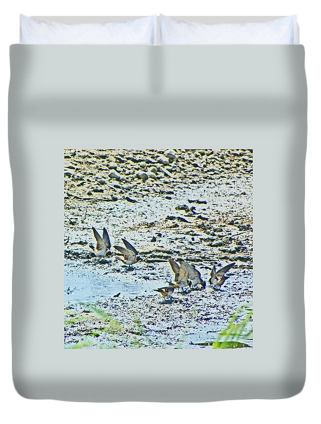 Expressive Duvet Cover featuring the photograph Swallows At The River by Lenore Senior