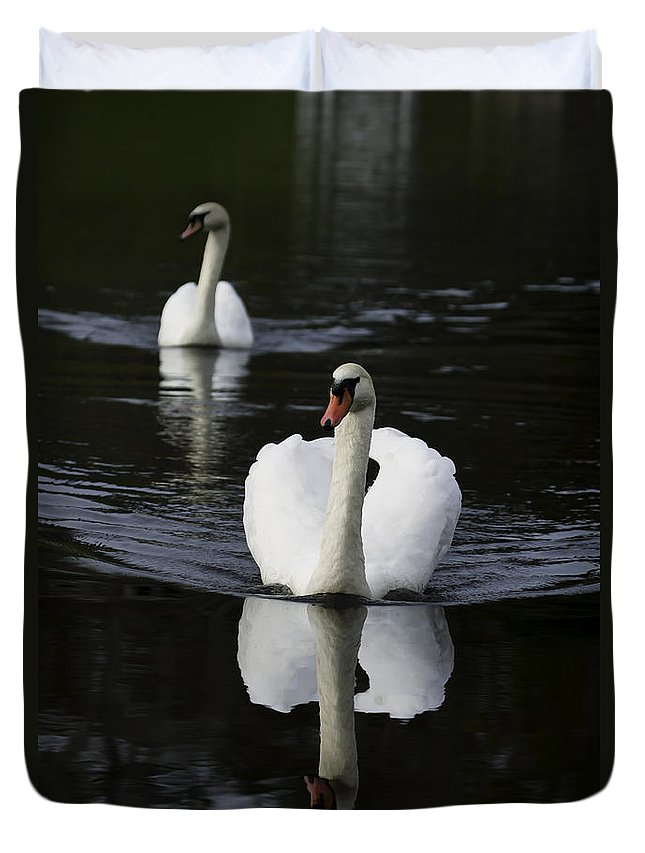 Bird Duvet Cover featuring the photograph Swan Pair 2 by Rob Travis