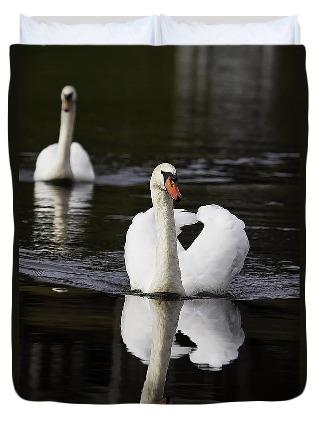 Bird Duvet Cover featuring the photograph Swan Pair by Rob Travis