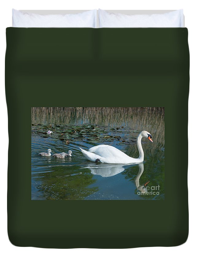 Swan Duvet Cover featuring the photograph Swan With Cygnets by Andrew Michael