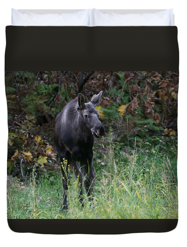 Alaska Duvet Cover featuring the photograph Sweet Face by Doug Lloyd