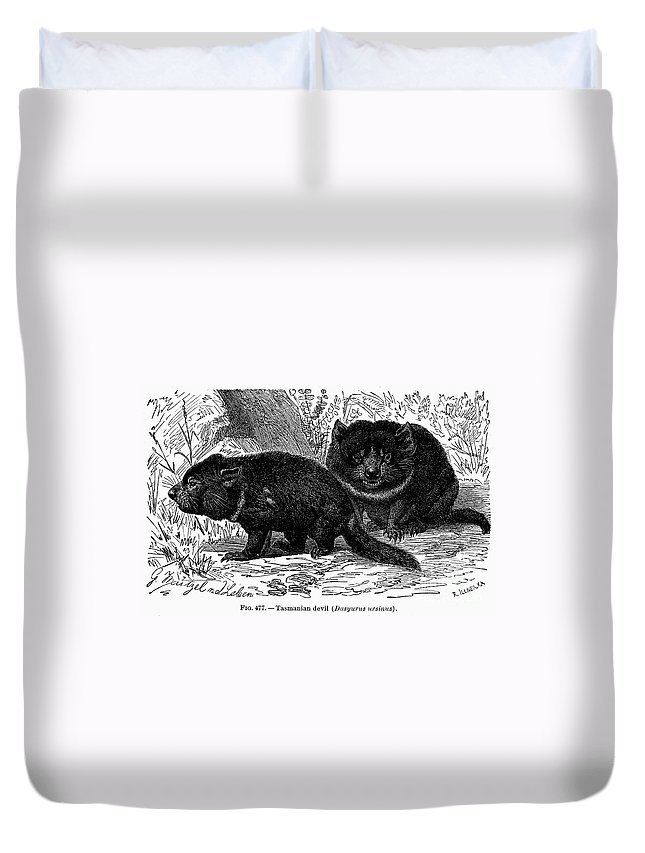 19th Century Duvet Cover featuring the photograph Tasmanian Devil by Granger