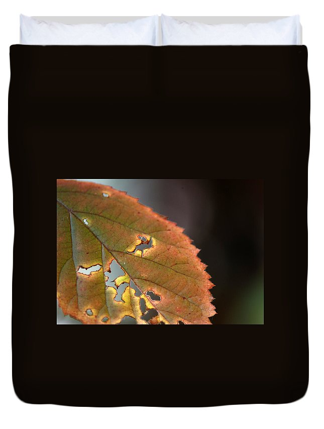 Fall Leaf Duvet Cover featuring the photograph Tattered Leaf by Optical Playground By MP Ray