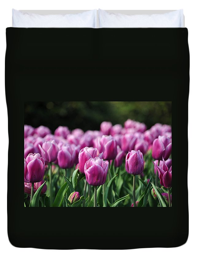 Tulip Duvet Cover featuring the photograph Taylor's Tulips by Trish Tritz