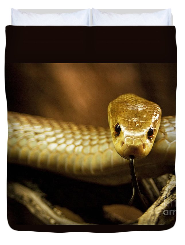 Snake Duvet Cover featuring the photograph Tempter by Andrew Paranavitana