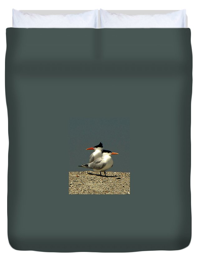 Nature Duvet Cover featuring the photograph Terning Heads by Peg Urban