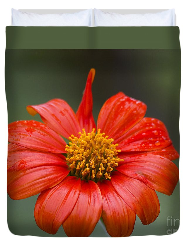 Flower Duvet Cover featuring the photograph Thai Flower In Glorious Orange #2 by Nola Lee Kelsey