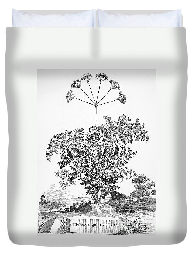 1696 Duvet Cover featuring the photograph Thapsia Major Latifolia by Granger