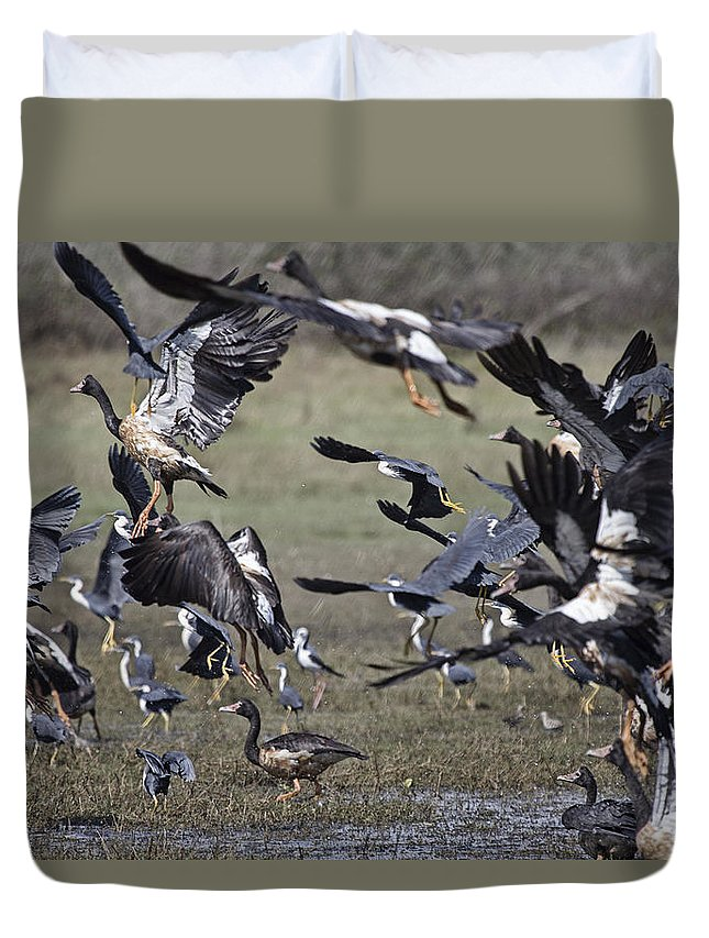 Magpie Geese Duvet Cover featuring the photograph The Billabong V18 by Douglas Barnard