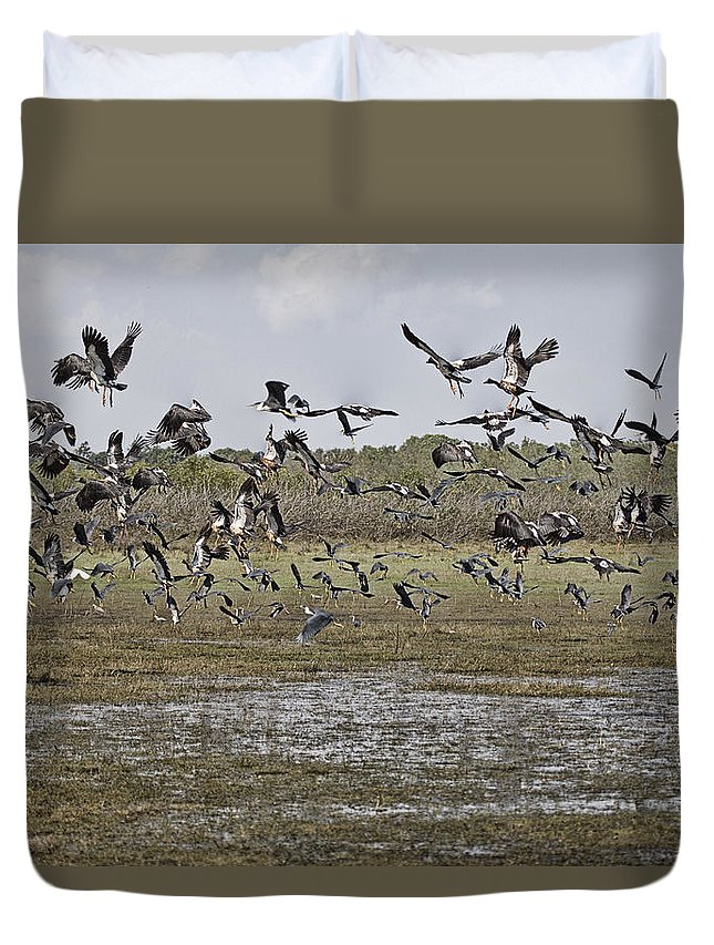 Magpie Geese Duvet Cover featuring the photograph The Billabong V19 by Douglas Barnard