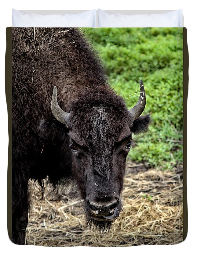 American Duvet Cover featuring the photograph The Bison Stare by Karol Livote