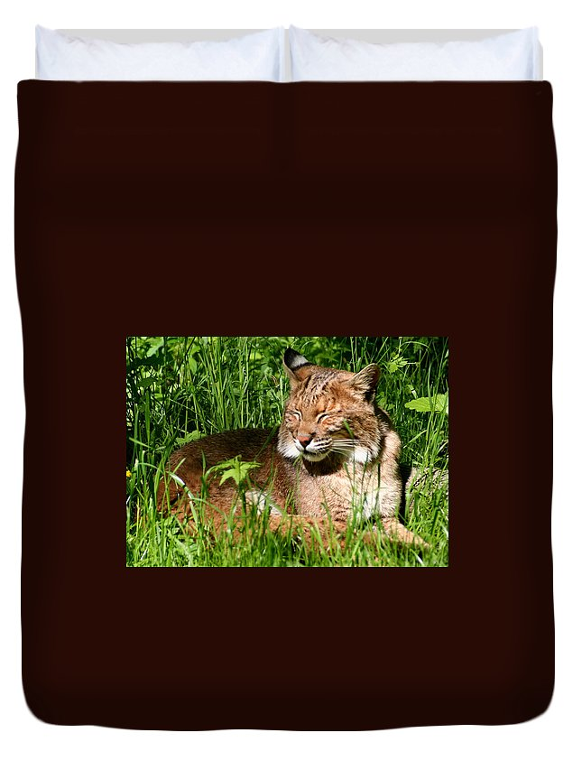 Lynx Rufus Duvet Cover featuring the photograph The Bobcat's Afternoon Nap by Laurel Talabere