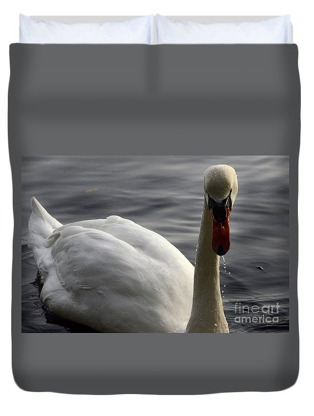 Swan Duvet Cover featuring the photograph The Bold Approach by Bob Christopher