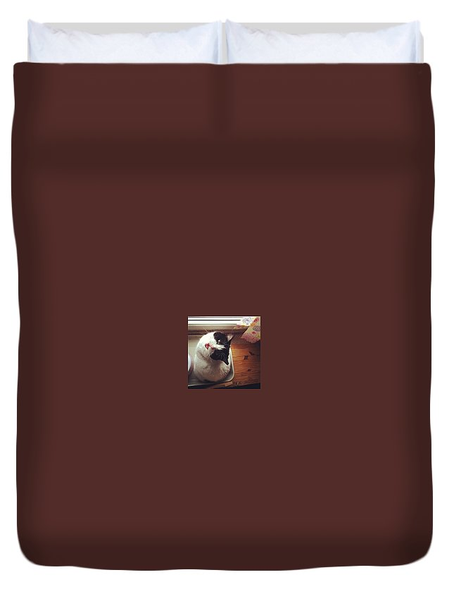 Catsofinstagram Duvet Cover featuring the photograph the Bowl's Empty! #cat by Katie Cupcakes